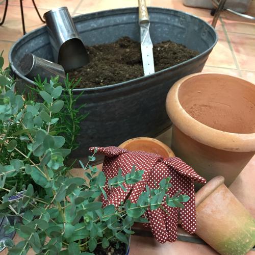 【9月】今年最後のチャンス!Dr.滝口の観葉植物植替え講座