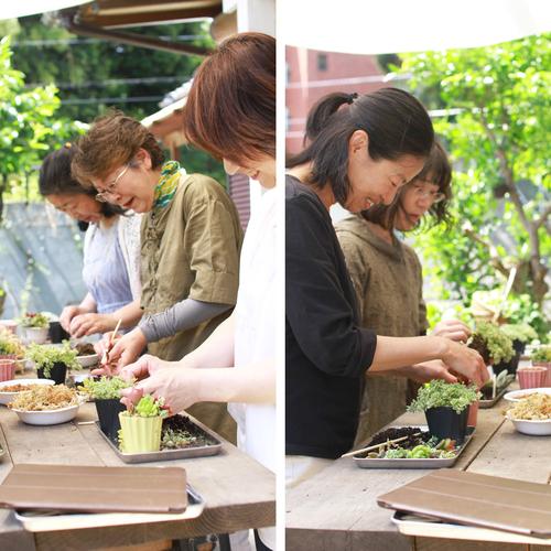 【体験】多肉植物寄せ植え教室