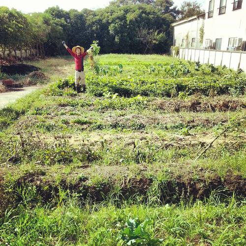自然農体験