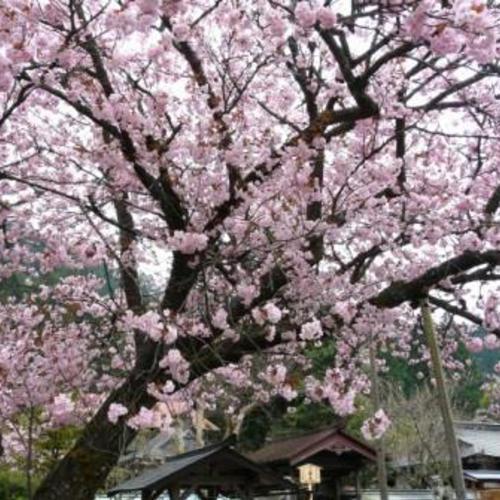 4月16日(土) 京都トレイル2期生 第6回目