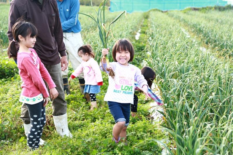 自然栽培の畑で援農(農家さんのお手伝い)体験