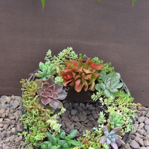 【FloraRIEフローラリエ】多肉植物とセダムのリース