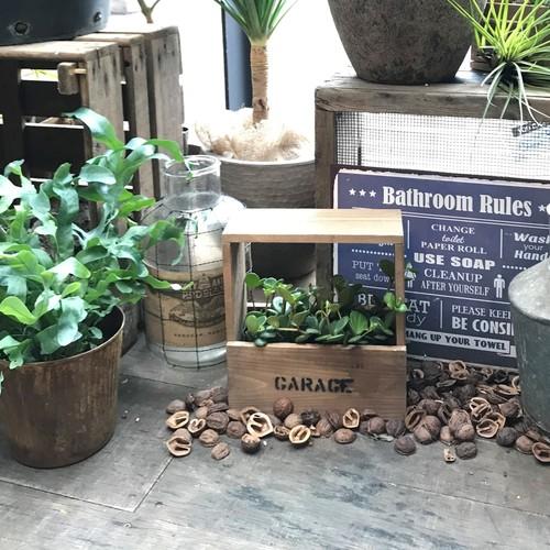 【名古屋店/2019.04.04】green planter box