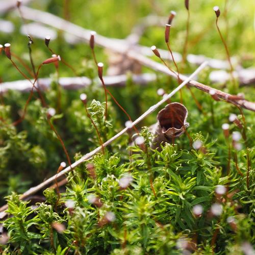 苔の専門家と歩く秋の櫛形山苔ツアー(日帰り)