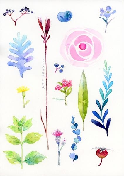 K.Itoya6階【色鉛筆】ステッドラー 水彩色鉛筆でボタニカルアート 8月18日(土)