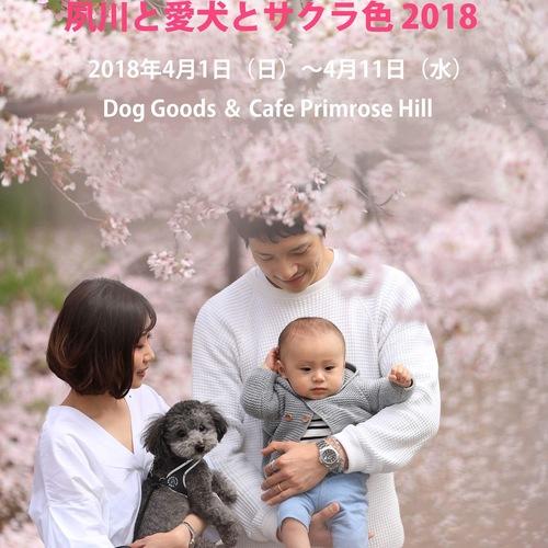 夙川と愛犬とサクラ色2018