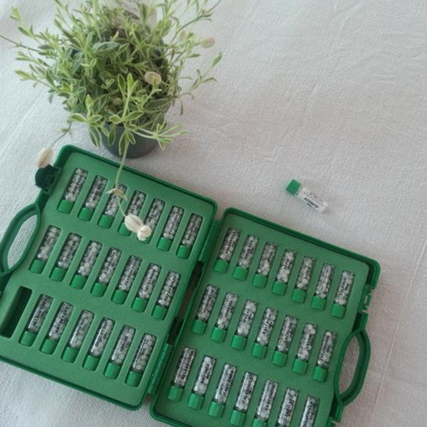 セルフケアのための自然の薬箱