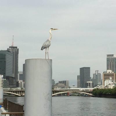 舟読 some stories on river