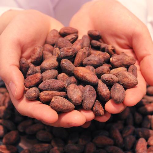 【cacao lab.】大人コース(高校生以上)