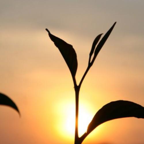 【YOGAワークショップ】徹底的にスーリヤ・ナマスカーラ(太陽への礼拝)を覚えよう!