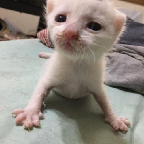 里親ご希望者様がご希望の猫と面会していただきます(60分)