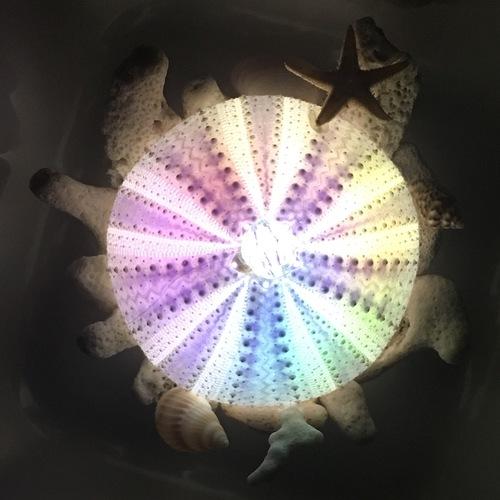 7/16(祝・海の日)本物のウニの殻で作る「ウニランプづくり」@横浜駅西口(ムービル)