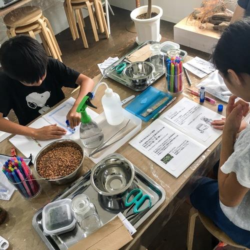 【自由研究・小学3年生以上限定】苔のテラリウム作成【清澄白河リカラボ】