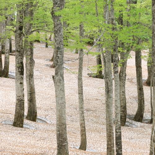 芽吹きの森トレッキング