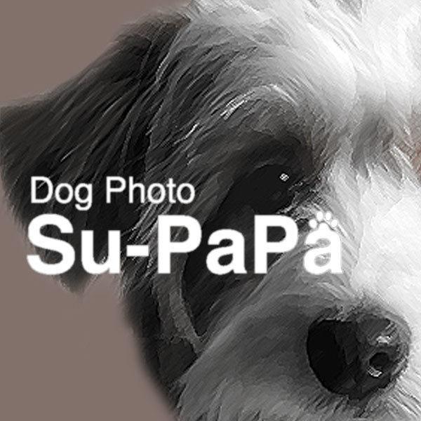 【Su-PaPa】10月28日愛犬撮影会 @Heart of WAN