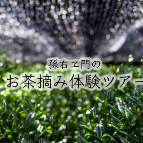 孫右ヱ門のお茶摘み体験ツアー2018(午前の会 AM10:00〜)