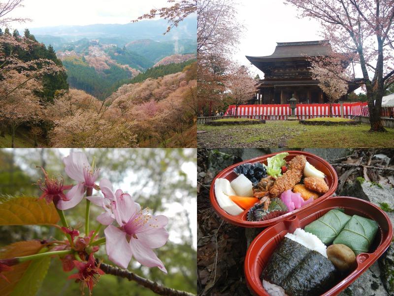 春の吉野山お花見トレッキング~定番! 上・中・下千本めぐり編~