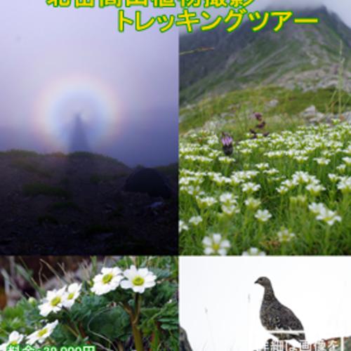 北岳高山植物撮影トレッキングツアー