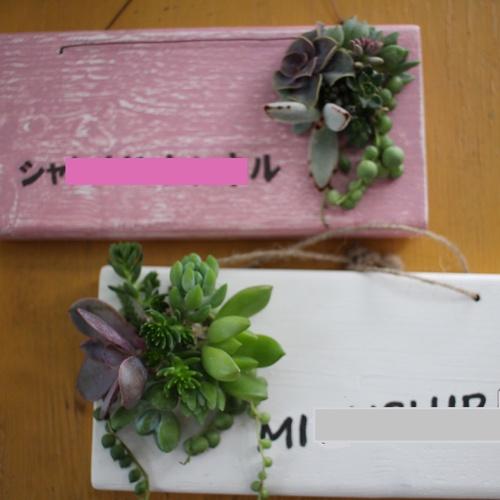 【受付終了】多肉植物で表札づくり「タブロー」ワークショップ