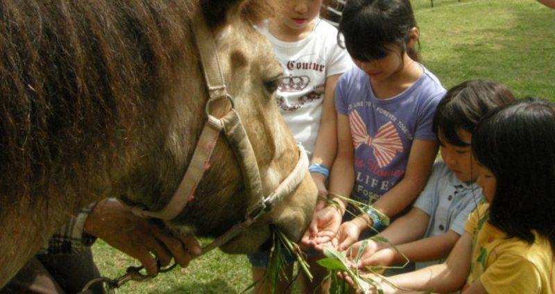 神戸【毎月第1・第3土開催】馬との出会い体験