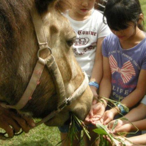 神戸【体験プログラム】馬との出会い体験
