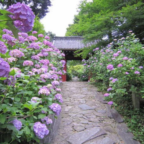 6/18「 写歩ろ(しゃほろ)本光寺 あじさい 撮影会!!」