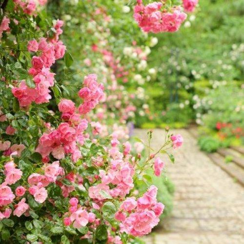 季節のルームフレグランス体験  60分3,500円(薔薇のワークショップ)広尾駅徒歩3分