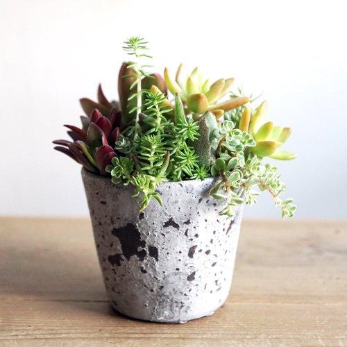 【中級編】多肉植物の寄せ植えワークショップ