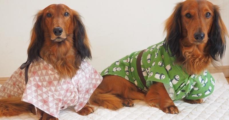 愛犬の浴衣を作ろう(1dayホビー講座)
