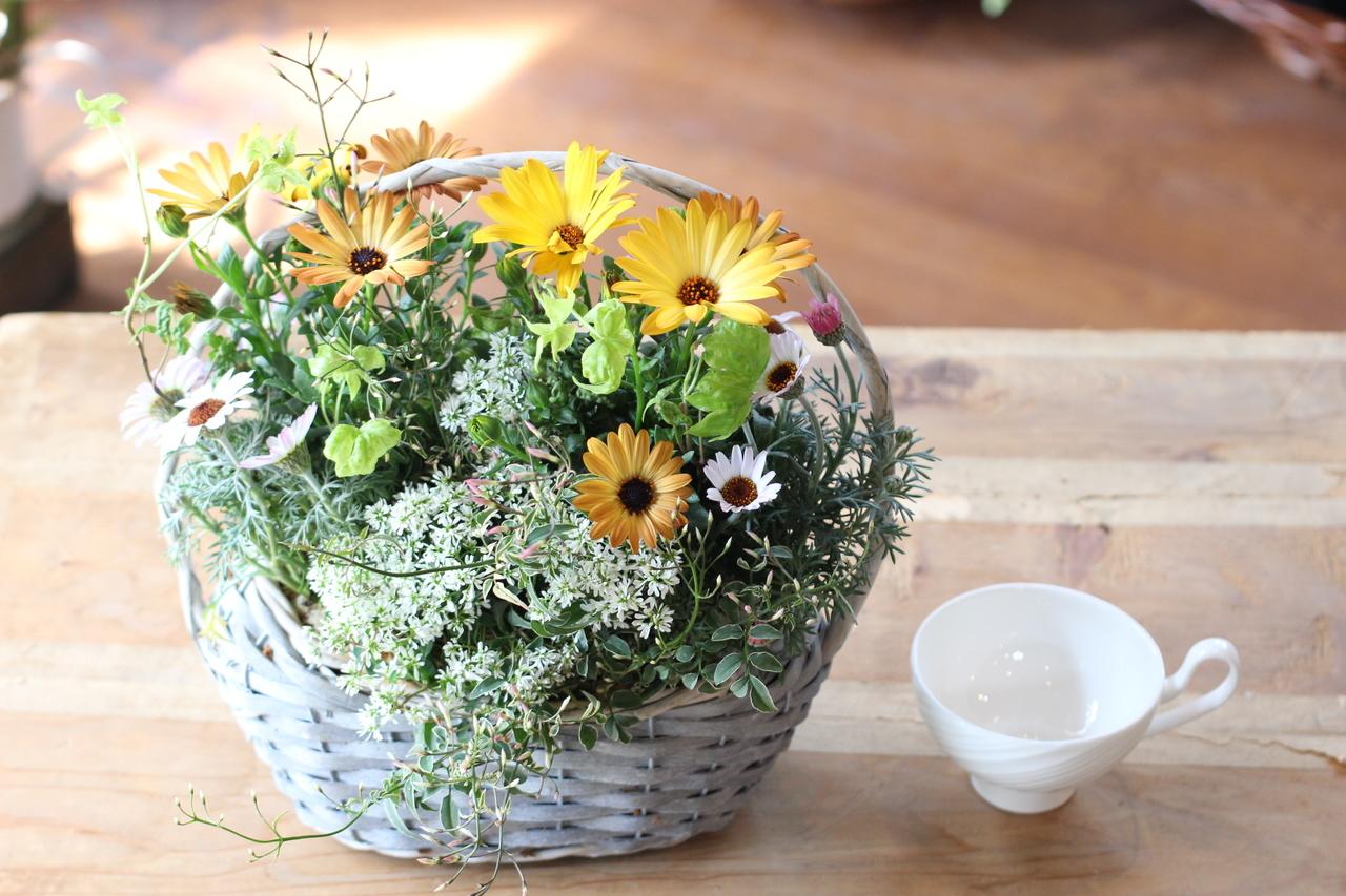 自分で作る母の日の贈り物よせ植えギャザリングレッスン/Mサイズ