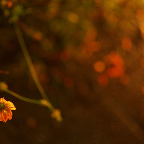 『写真と俳句、季語と写真表現』 - 第2回第2部