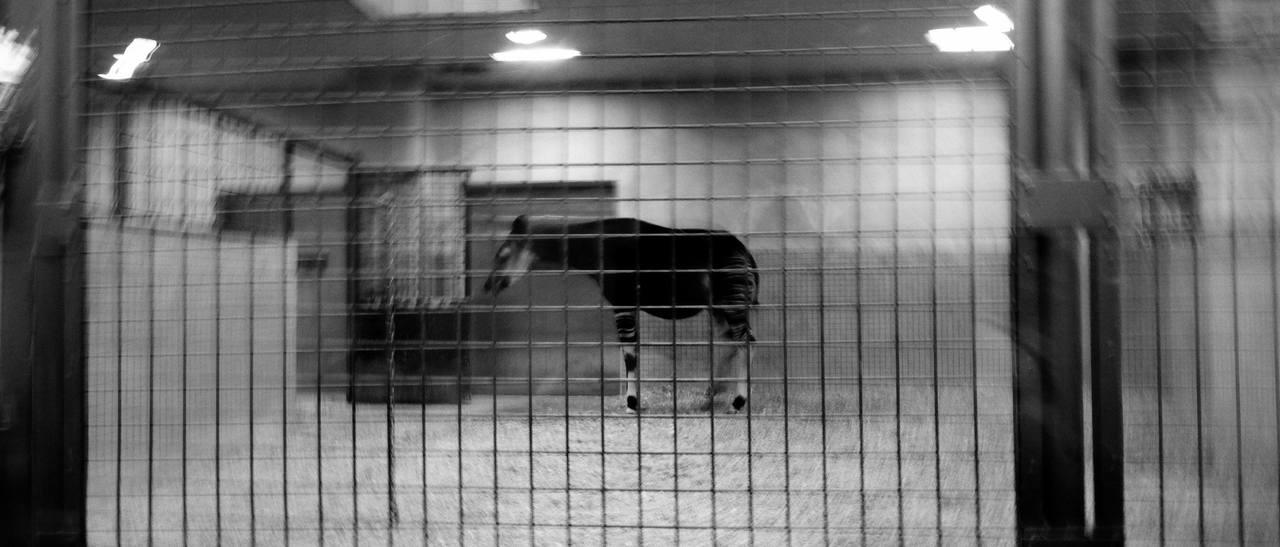 表現実践ワークショップ「育緒とディープに撮る上野動物園-デジタルコース」