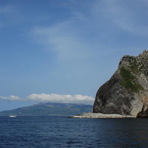 mahanaのカンムリウミスズメ観察ツアー