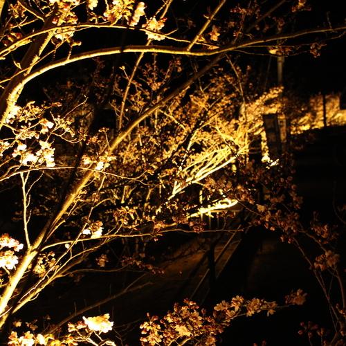 【水月湖 × 桜 × ライトアップ】7日間だけの夜桜カヤック