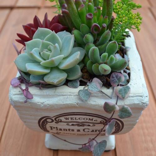 【FloraRIEフローラリエ】多肉植物寄せ植え