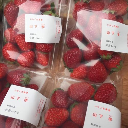 やました農園 イチゴ予約