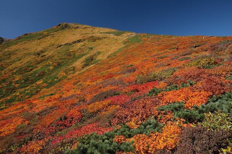 仙台お山塾 栗駒山 ◎東栗駒山から眺める紅葉の大絶景