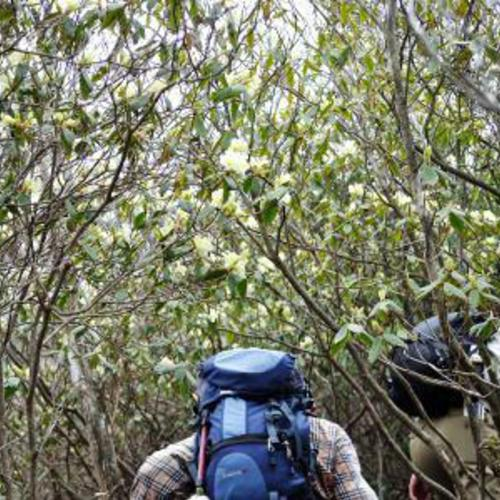4月20日 ヒカゲツツジの名峰・向山連山縦走