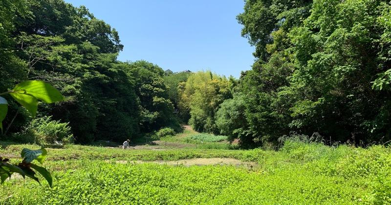 鎌倉散策部 〈 大人の遠足 〉2021春 漢方スペシャルランチ付き