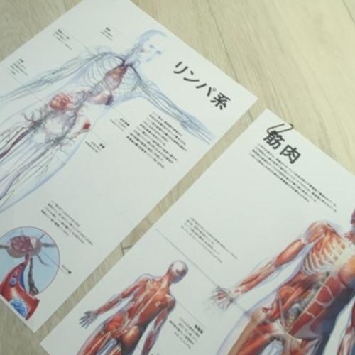 特別クラス!「エアリアルヨガ解剖学」★1部
