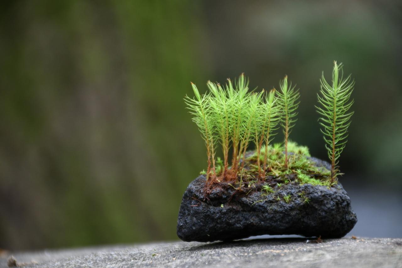 【 名古屋 】溶岩石着生 苔テラリウムワークショップ 道草