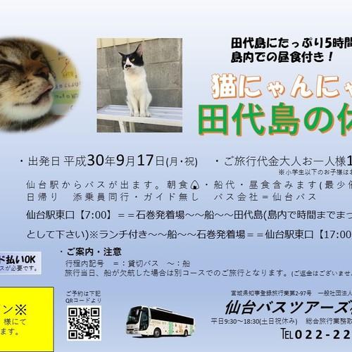 猫にゃんにゃん 田代島の休日