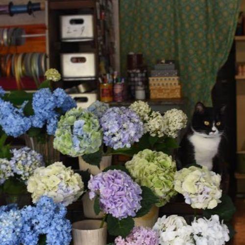 Special class**『アジサイの花束♪好きなのチョイス♪