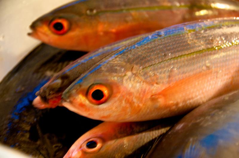 WORKSHOP:現役漁師AXIS船長の魚のさばき方
