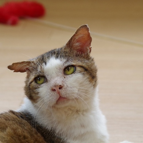 新館一階で猫たちとふれあっていたただきます(60分)