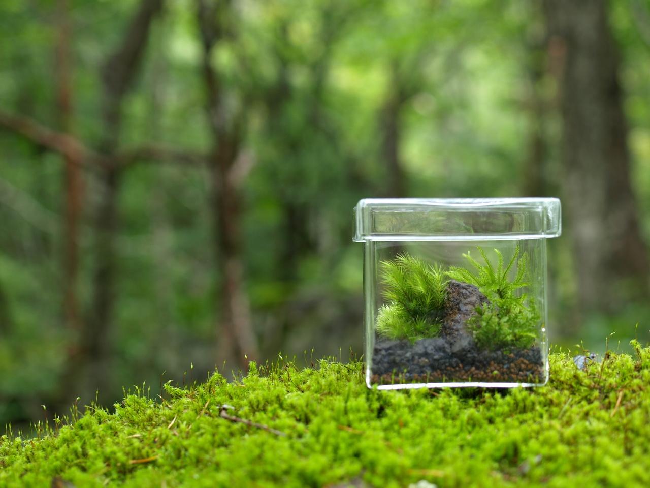 【 KABOLO 】小さな苔の森 苔テラリウムワークショップ 道草〔茅場町〕