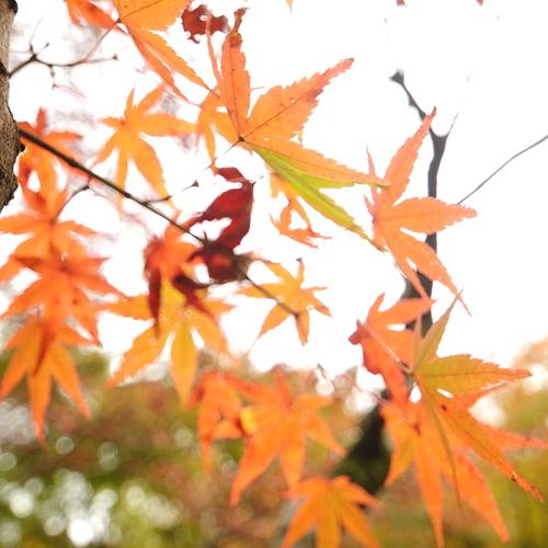 ごりやく満載‼️開運✨養老渓谷滝ヨガ、ごりやく温泉、天空の寺ヨガリトリート1日(宿泊込み)