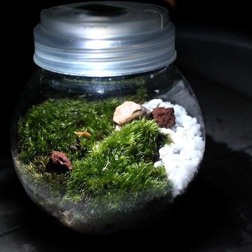3/24・25  小さな緑の生態系「モス・テラリウムづくり」@IID世田谷ものづくり学校