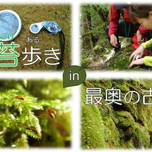 苔歩き(こけあるき) in 最奥の古道
