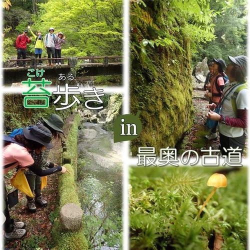 【11/12(日),19(日)】苔歩き in 最奥の古道